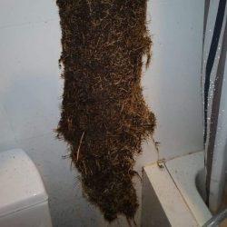 clear floor trap choke mr plumber singapore condo bedok 3